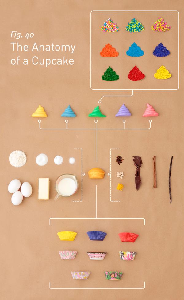 CupcakeAnatomy_01